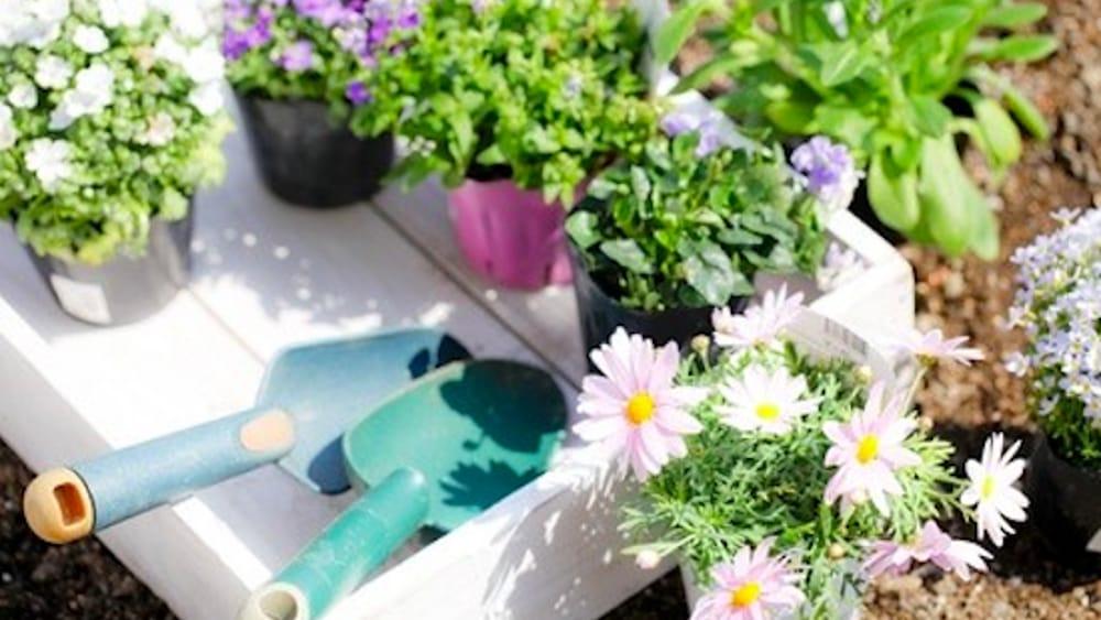I fiori da acquistare a giugno