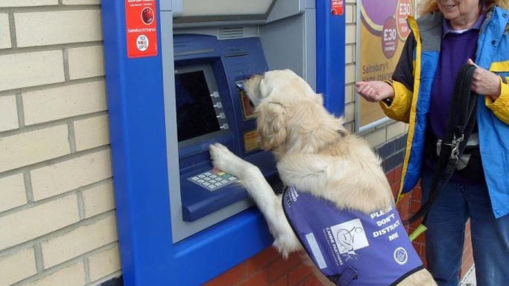 Da oggi anche cani e gatti possono aprire un conto - La banca piu conveniente per aprire un conto corrente ...