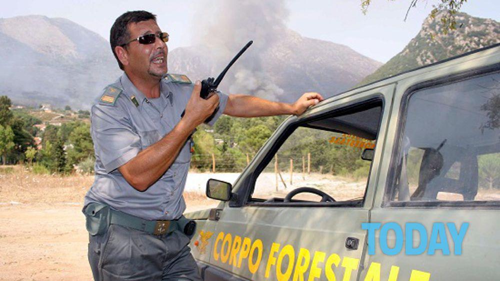 Le forze di polizia si ridurranno a quattro addio al corpo forestale - Finestre pensione 2015 ...